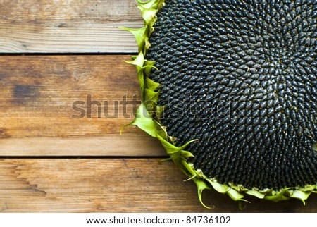 Sunflower with Seeds  on wooden Background