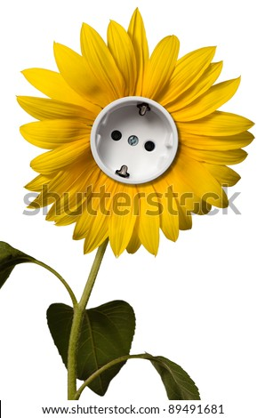 Sunflower with socket - stock photo
