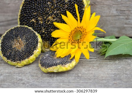 Sunflower with sunflower seeds on wooden texture