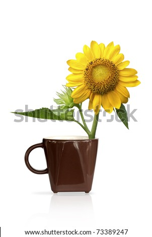 Sunflower yellow in coffee brown - stock photo