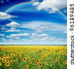 sunflowers and rainbow - stock photo