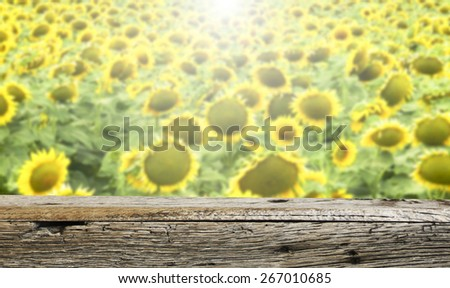 Sunflowers and the old wooden shelf - stock photo