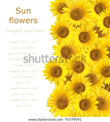Sunflowers background with sample text - stock photo