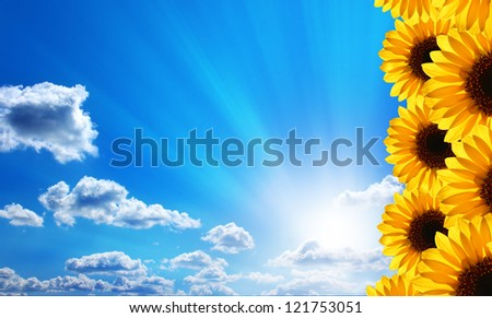 Sunflowers. Blue sky, clouds, sun and sunrays.