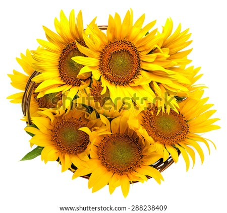 sunflowers in a basket - stock photo