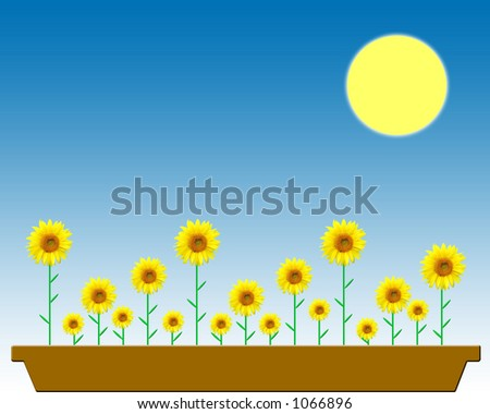 Sunflowers in a flowerpot on a sunny day - stock photo