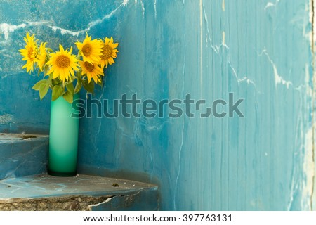 Sunflowers in a glass vase. Against blue colored wall as a background. - stock photo