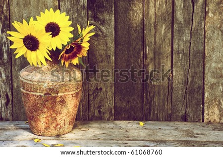 Sunflowers in a vase on a rustic, grunge background with copy space. This image is now available in my portfolio, with the flowers and vase isolated on white. - stock photo