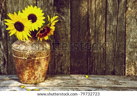 Sunflowers in the partial shade on a rustic, grunge background with copy space. This image is also available in my portfolio, isolated on white. - stock photo