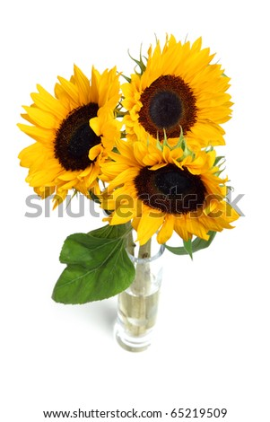 sunflowers in vase isolated on white background - stock photo