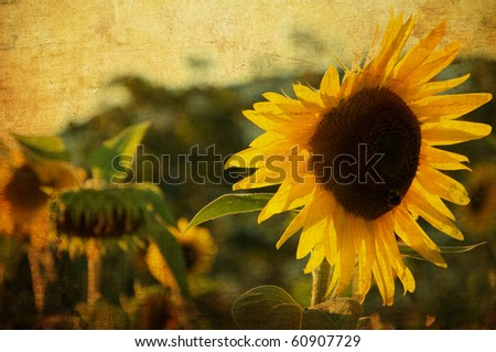 Sunflowers with an air of old - stock photo