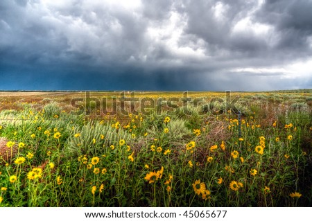 Sunflowers with approaching severe storm - stock photo