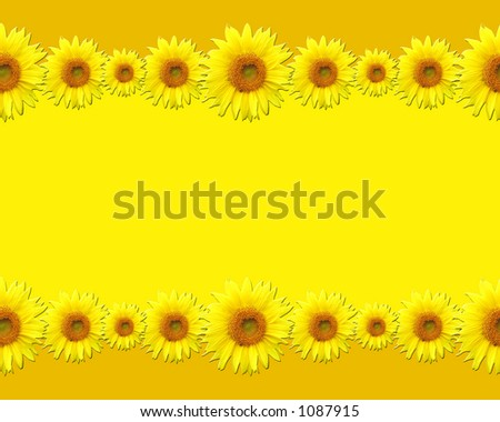 Sunflowers with blank space for words or picture - stock photo