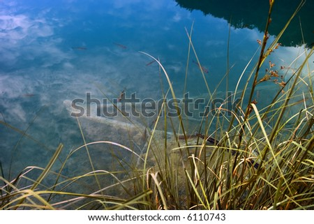 Sunken boat at the bottom of a green lake - stock photo