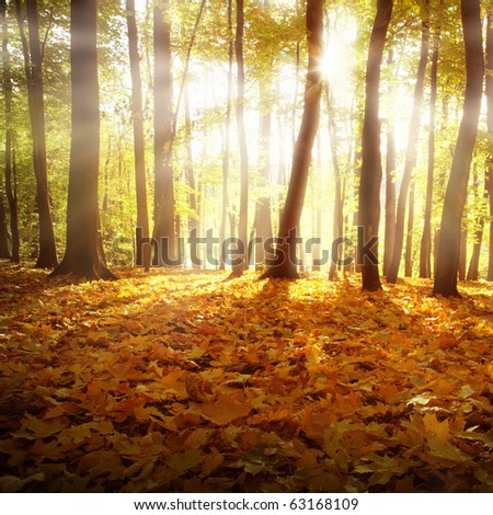 Sunlight and autumn forest. - stock photo