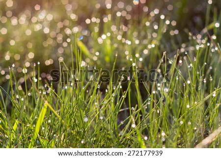 sunlight and bright dew on green grass in summer morning - stock photo