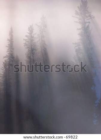sunlight and fog - stock photo