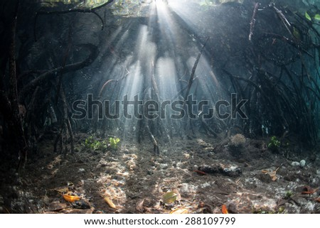 Sunlight beams through the canopy and prop roots of a mangrove forest in Raja Ampat, Indonesia. This remote tropical area harbors some of the Coral Triangle's most healthy marine habitats. - stock photo