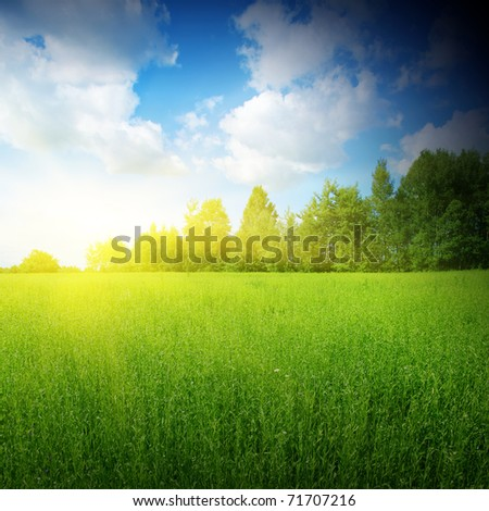Sunlight ,blue sky and green grass. - stock photo