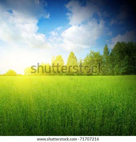 Sunlight ,blue sky and green grass. - stock photo
