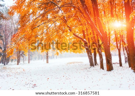 Sunlight breaks through the autumn leaves of the trees in the early days of winter - stock photo