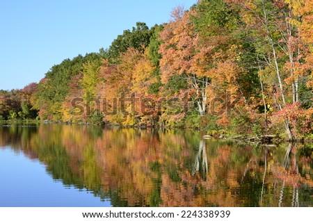 Sunlight-enhanced foliage half reflected on an New England pond - stock photo