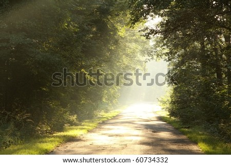 Sunlight entering into the lush deciduous forest on a foggy morning. - stock photo