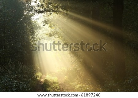 Sunlight falling on the path in autumn forest on a foggy morning. - stock photo