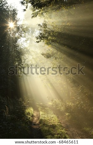 Sunlight falling on the path in the autumn forest on a foggy morning. - stock photo