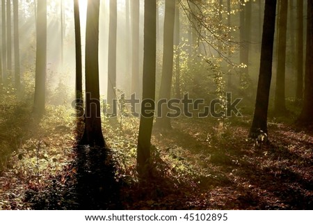 Sunlight falls into the autumn woods surrounded by the morning mist. - stock photo