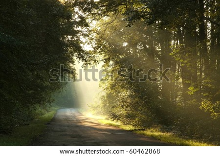 Sunlight falls into the dark deciduous forest on a foggy morning. - stock photo