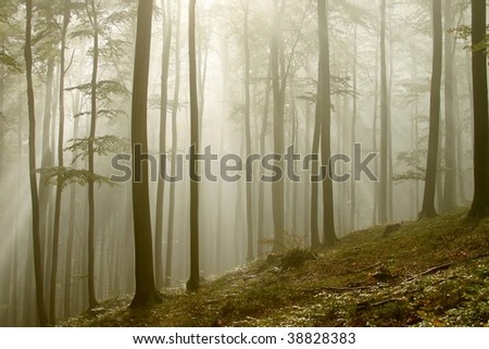 Sunlight falls into the misty autumn forest on the mountain slope. - stock photo