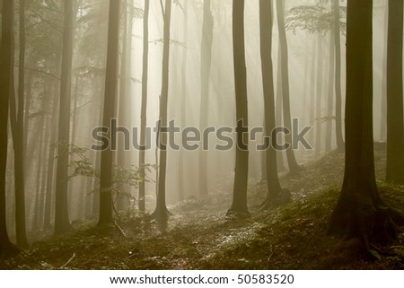 Sunlight falls into the misty autumn forest with beech trees growing on the slope. - stock photo