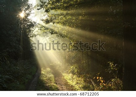 Sunlight falls on a dirt road in the woods on a foggy autumn morning. - stock photo
