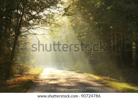 Sunlight falls on a forest road surrounded by the colors of autumn leaves. - stock photo