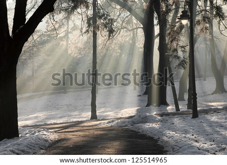 Sunlight filtering through a park covered in snow. - stock photo