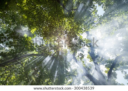 Sunlight filtering through the leaves of trees on jet. Concept for environmental protection - stock photo