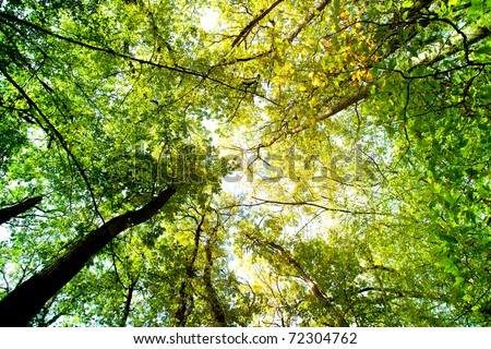 Sunlight goes through autumn green and yellow leaves - stock photo