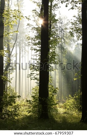 Sunlight illuminates the trees in a misty spring forest. Photo taken in May. - stock photo