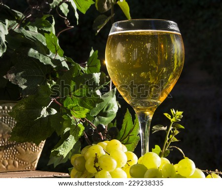 Sunlight in a glass of sparkling wine/Sparkling White Wine/Lat afternoon sun radiates through a glass of white sparkling wine - stock photo