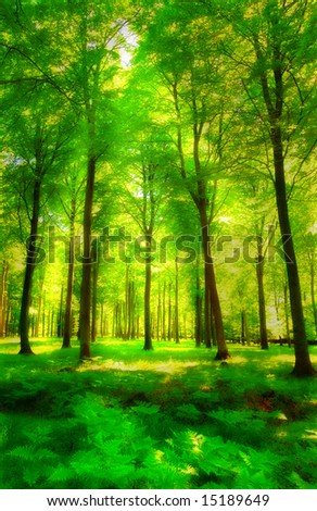 Sunlight in a green and lush forest