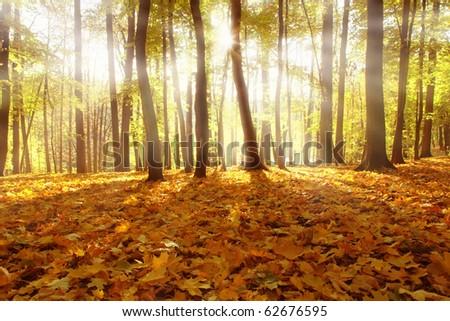 Sunlight in autumn forest. - stock photo