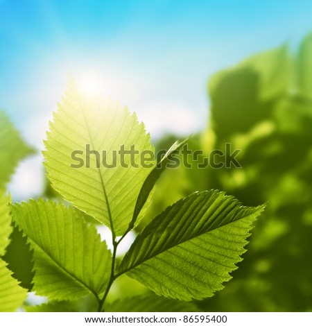 Sunlight in blue sky and green foliage. - stock photo