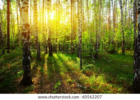 Sunlight in forest - stock photo
