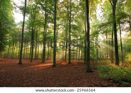 Sunlight in forest at early morning - stock photo