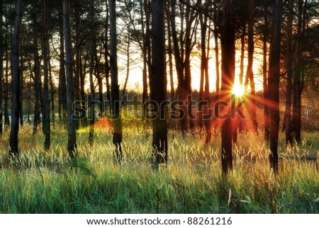 Sunlight in forest. Nature composition. - stock photo