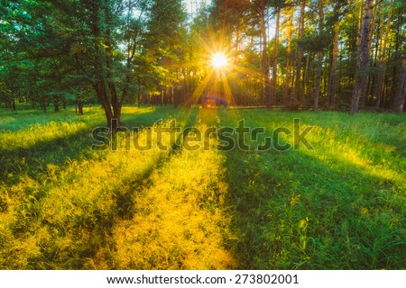 Sunlight In Forest, Summer Nature. Sunny Trees And Green Grass. Woods Background - stock photo
