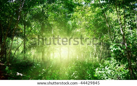 sunlight in jungle of Dominican - stock photo