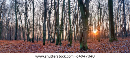 Sunlight in the green end yelow forest, autumn time - stock photo