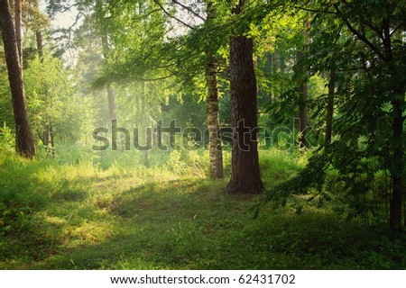 Sunlight in the green forest - stock photo